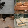 上棟に向けて2 木材搬入~土台敷込2